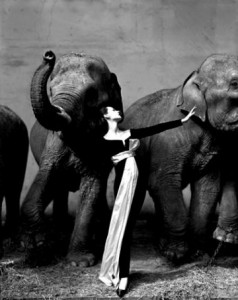 elephants-better